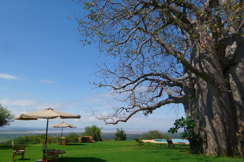 campsite-giant-baobab-tree-views-migombani-campsite